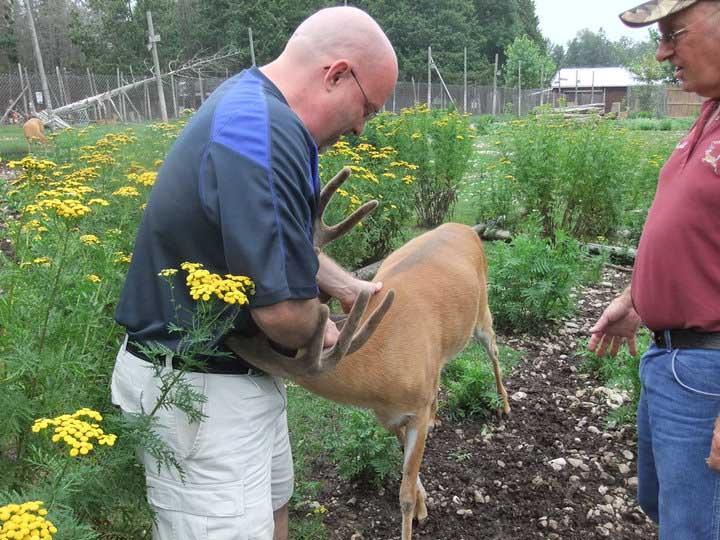 buy local tv deer ranch michigan